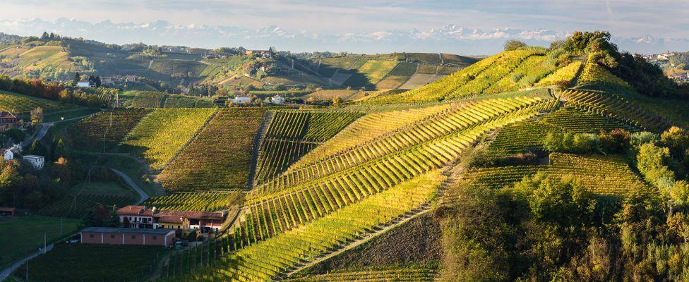 Antica cascina dei conti di roero produces wines since 1950