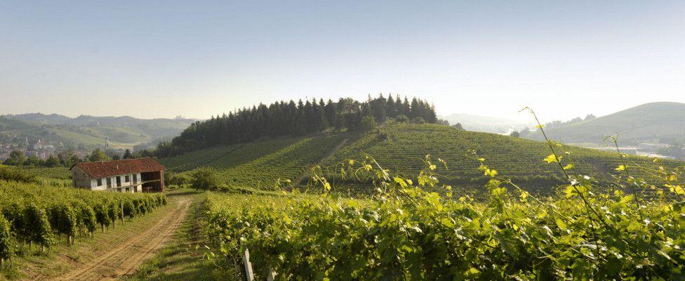 Antica cascina dei conti di roero view of the hills