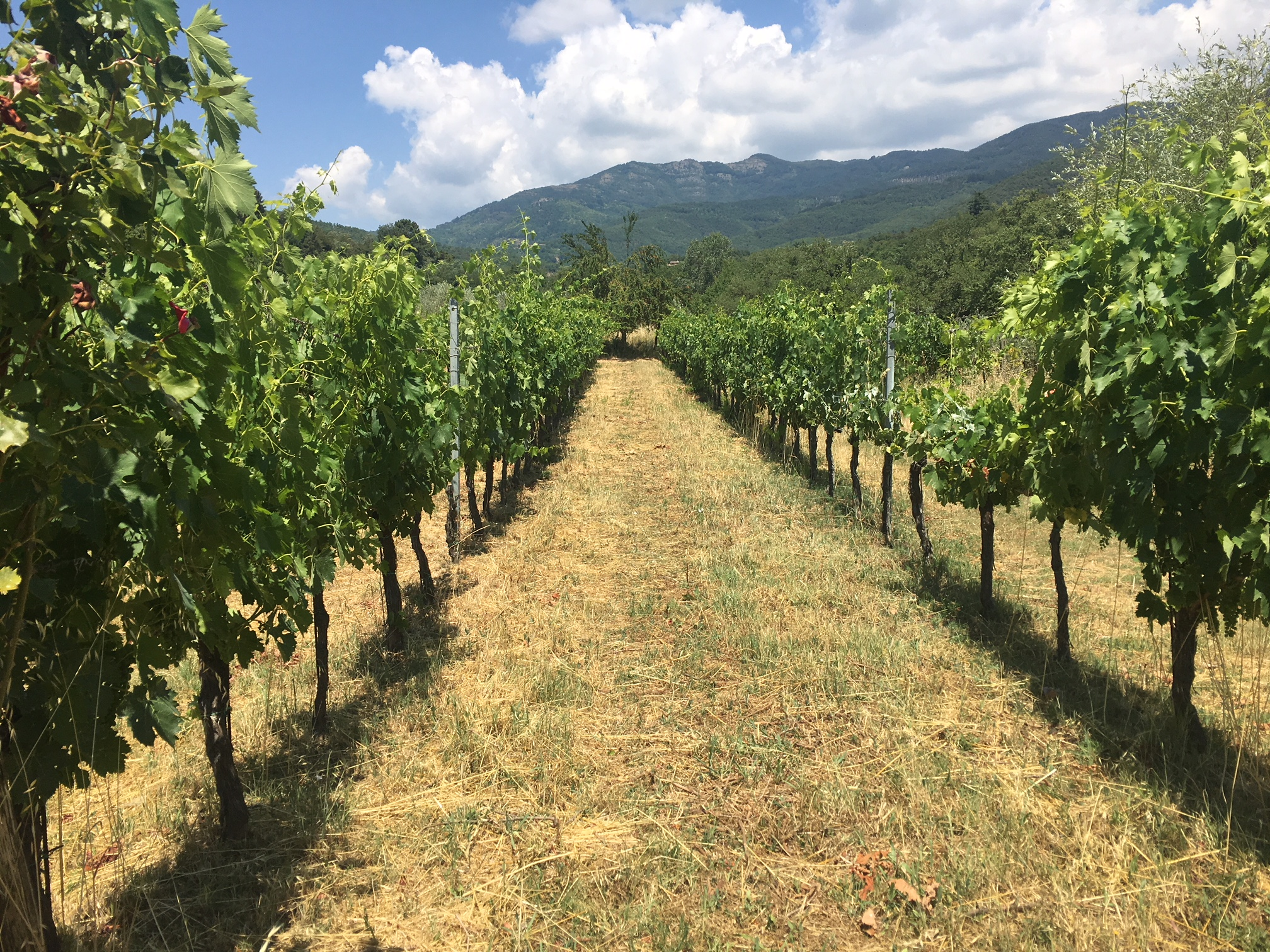 La Salceta organic winery