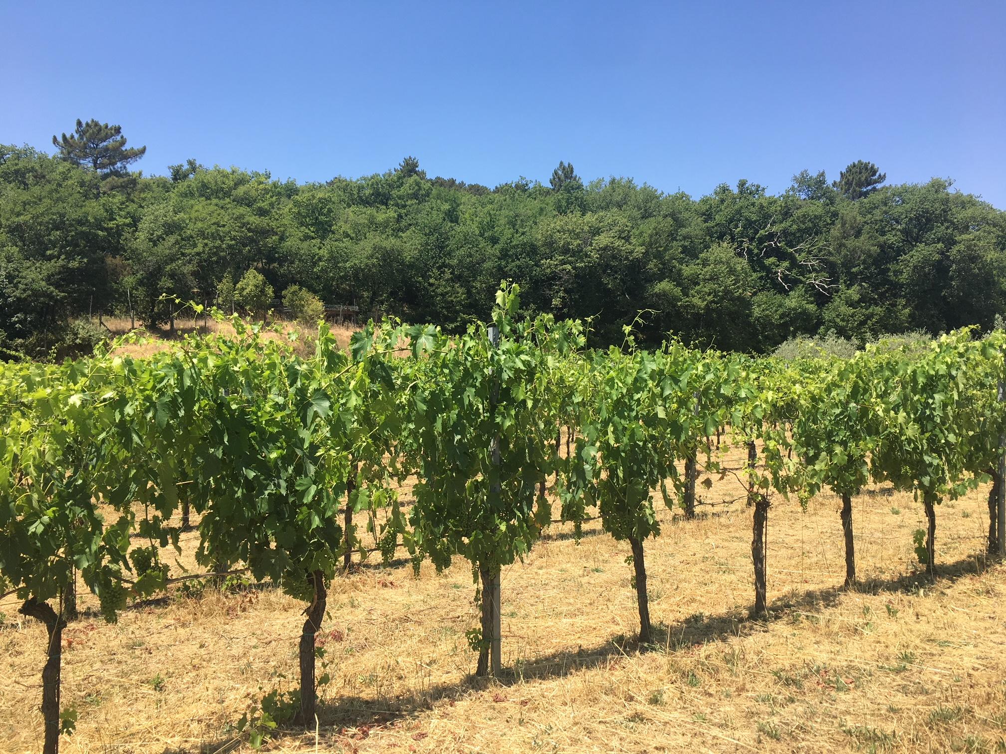 La salceta history and tradition to produce natural wines