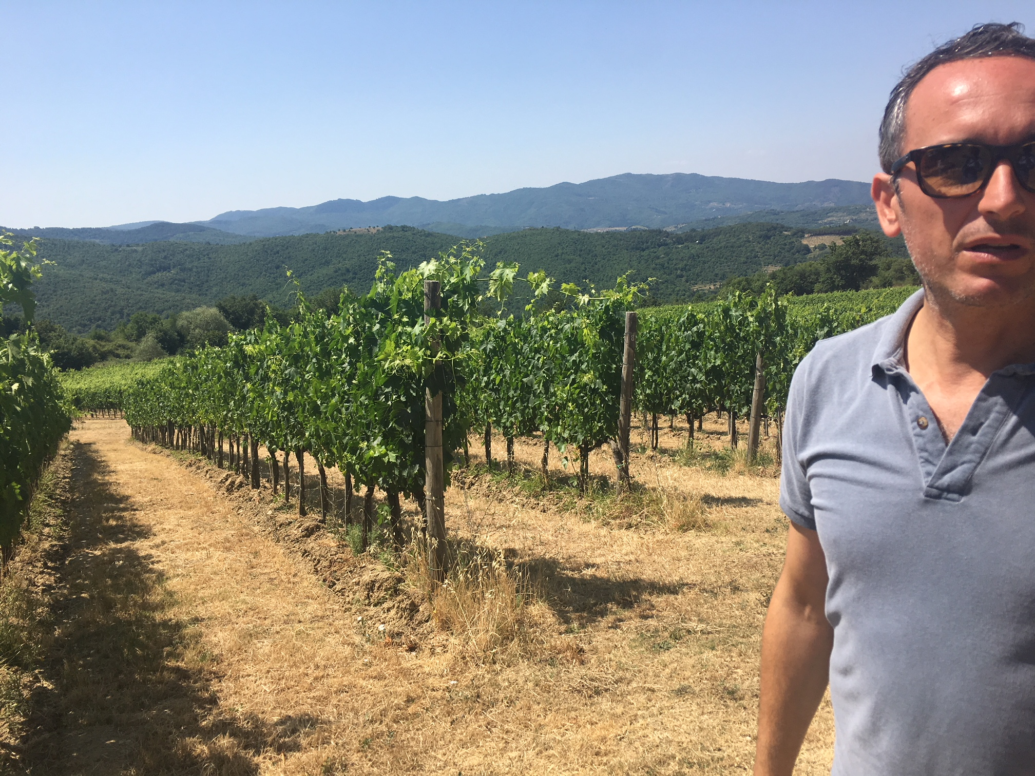 Podere di Pomaio bio wines vineyard