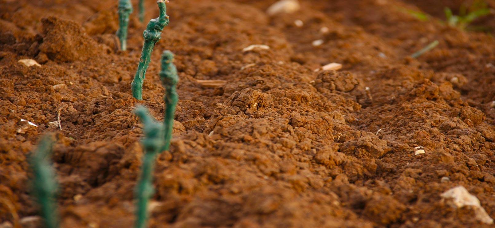 La Pria Natural Bio prosecco soil